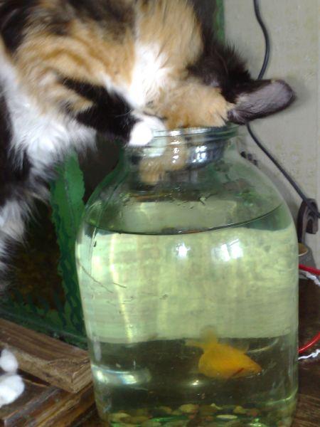 иди ко мне золотая рыбка!