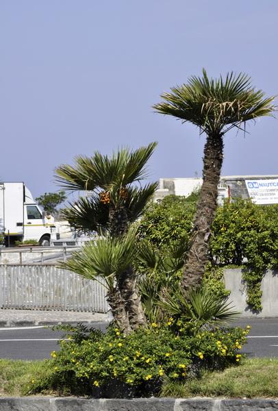 пальмы после стрижки:)