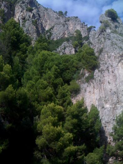 http://mia-italia.com/sites/default/files/Capri4.jpg