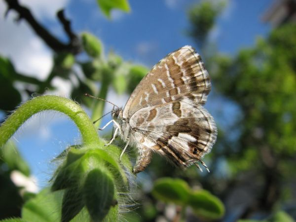Ещё бабочка