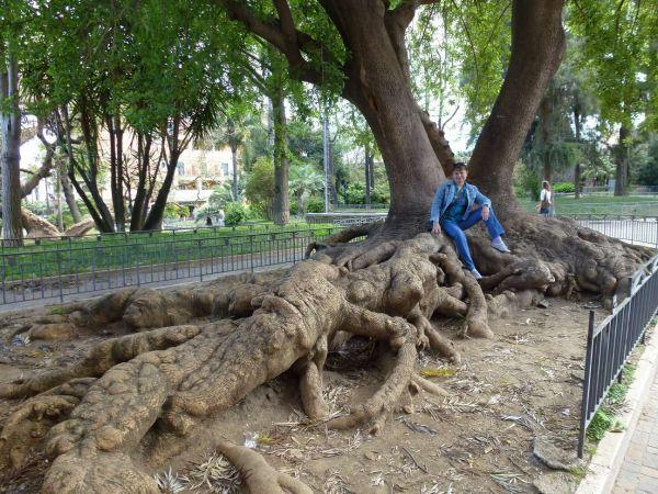 Дерево-крокодил