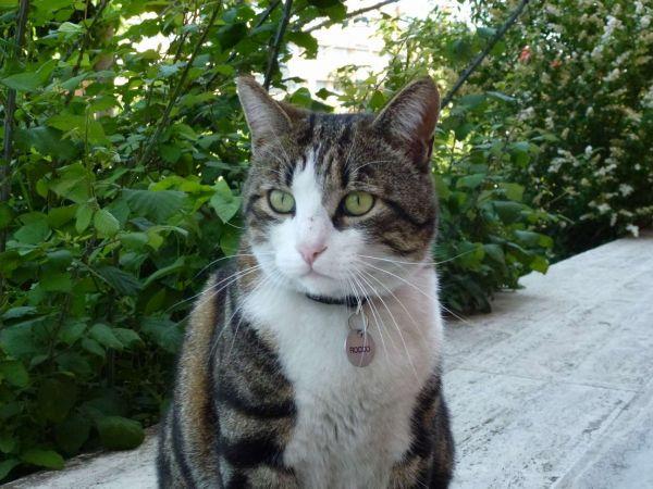 Римский котик Рокко:)