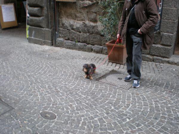 https://mia-italia.com/sites/default/files/P3270155.JPG