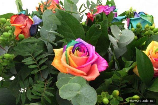 http://mia-italia.com/sites/default/files/Rainbow_Flowers_021.jpg