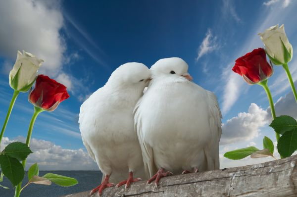 https://mia-italia.com/sites/default/files/doves in love.jpg
