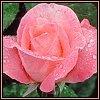 https://mia-italia.com/sites/default/files/flower_hot_bases7.jpg