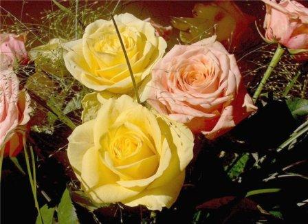 https://mia-italia.com/sites/default/files/flowers.jpg