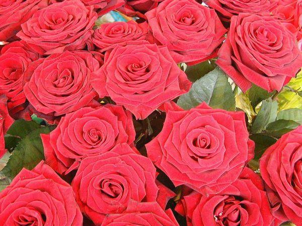https://mia-italia.com/sites/default/files/www_radionet_by_ru_flowerses_54.jpg