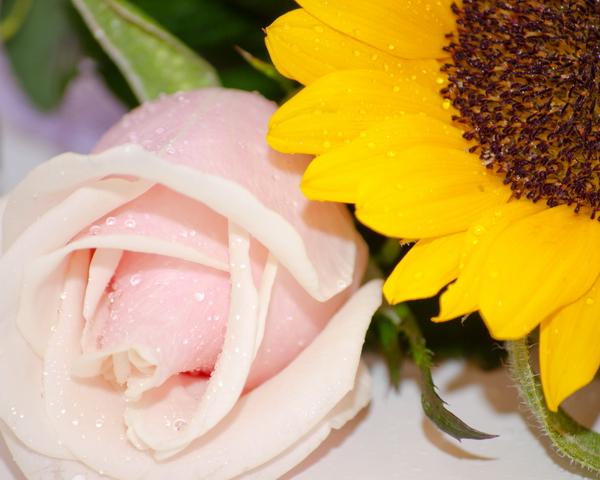 zveto4ki_01.jpg