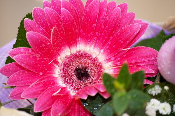 zveto4ki_02.jpg
