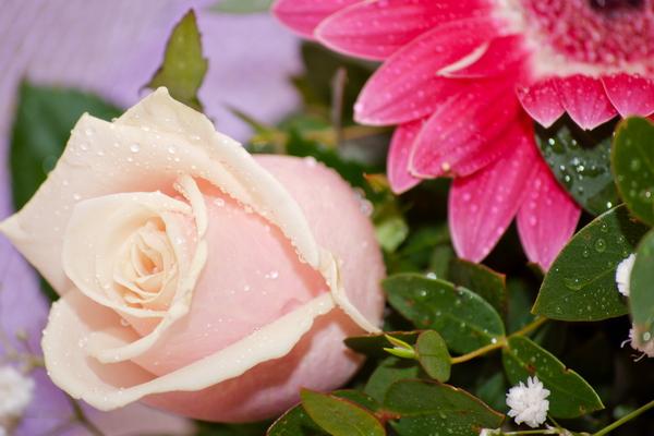 zveto4ki_03.jpg