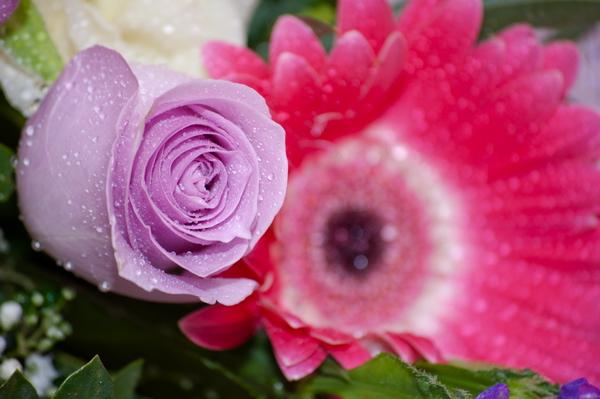 zveto4ki_04.jpg